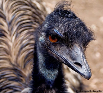 EMU HOBART, TASMANIA