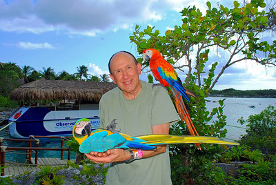 Scarlet Macaw (on shoulder) & Blue-and-Yellow Macaw