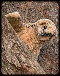 MUPPET OWL