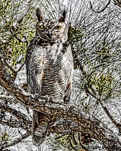 SKETCH - great horned owl