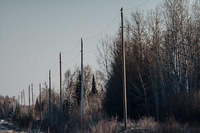 Northern Hawk Owl Zim Road Yoki Road Sax-Zim Bog MN DSC03073