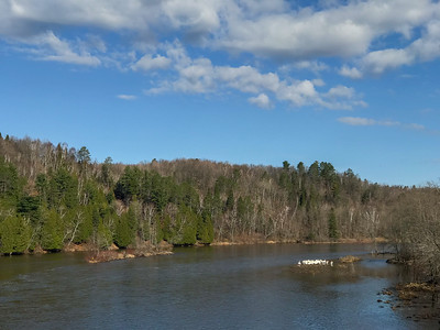 American White Pelican flock St  Louis River at Fond du Lac Bridge Duluth MN -2713