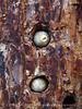 Acorns in granary tree, Pinnacles NP CA (3)