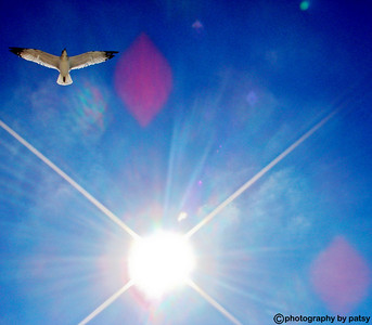 GULL in SUNLIGHT ANNA MARIA ISLAND