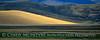 Sandhill Cranes, Hayden, Colorado (4)