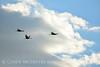 Sandhill Cranes, Hayden, Colorado (9)