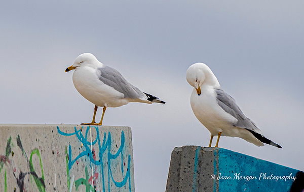 A Pair of Gulls Basking in the Sun