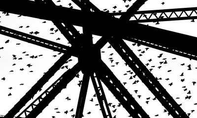 European Starlings Aerial Lift Bridge Canal Park Duluth MN IMG_9944