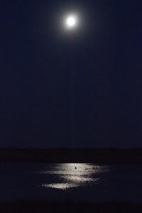 Trumpeter Swan trio moonlight keyhole silhouette Crex Meadows Grantsburg WI IMG_2387