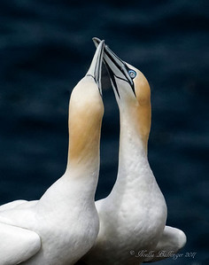 GANNET GREETINGS