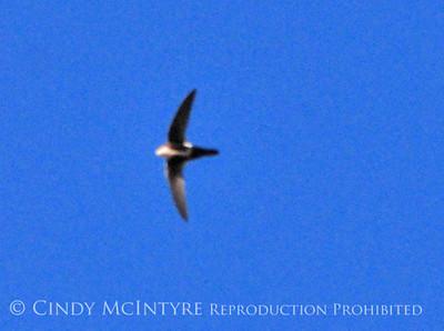 Upper Rio Grande Birds