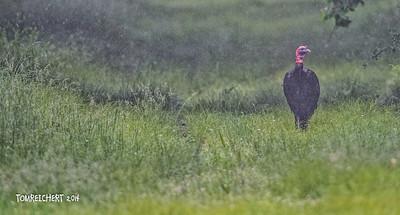 WILD TURKEY IN THE POURING RAIN - NORTH FORK PRESERVE
