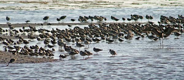 Mixed Water Birds