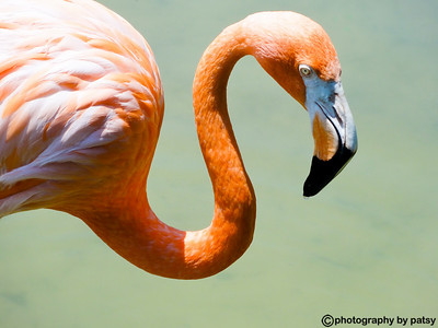 FLAMINGO in the sunlight
