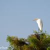 Crane in Treetop