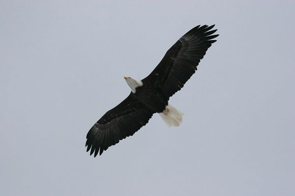 eagle5698