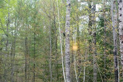 Pileated Woodpecker Skogstjarna Carlton County MN DSC07858