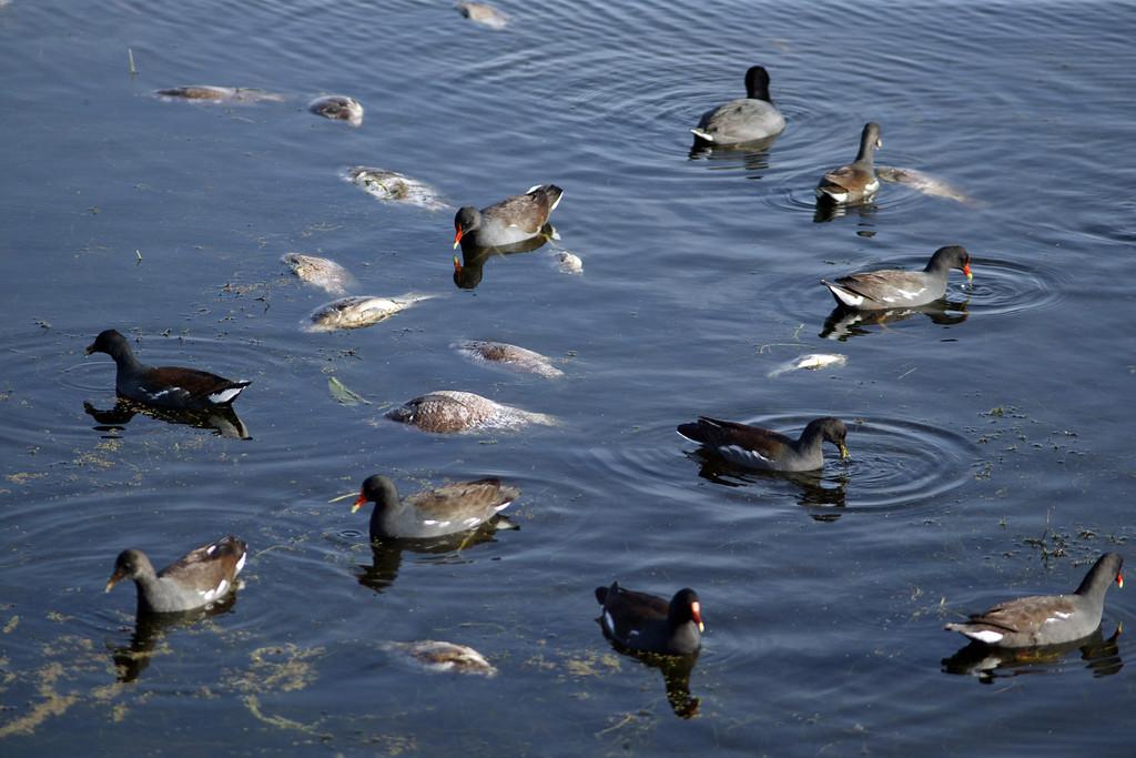 Fish Kill Winter 2010