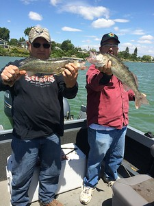 Bruce and Chris caught some big walleye on Moses Lake.