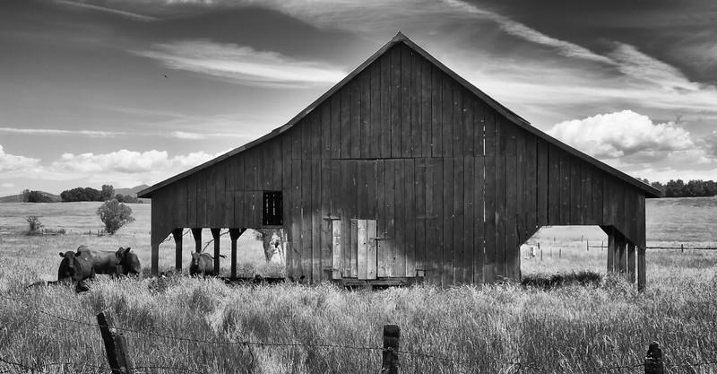 Farm, Highway 49 CA