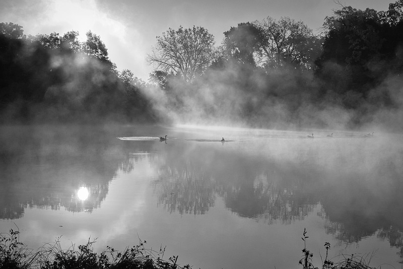 Early morning mist, Morton Arboretm