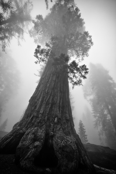 Sequoia, King's Canyon National Park