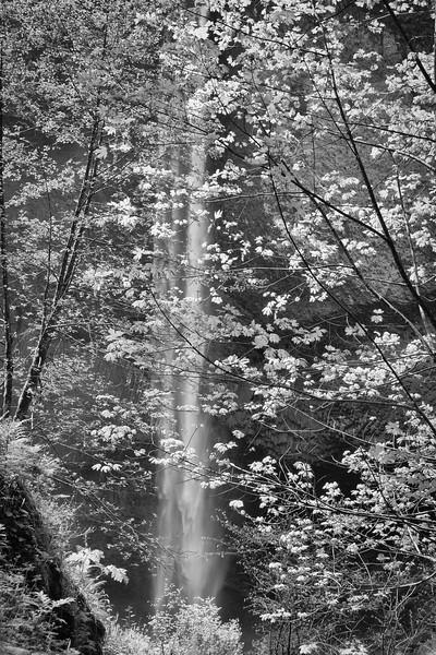 Latourelle Falls, Oregon