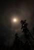 Moon Ring on Valentine's Night - Ouachitas
