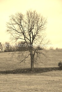 tree in sepia (1)