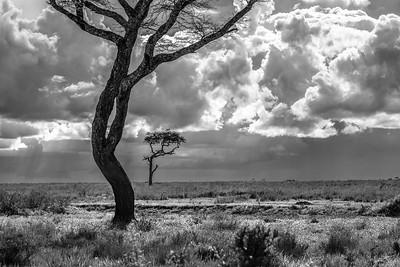 Plaine du Serengeti