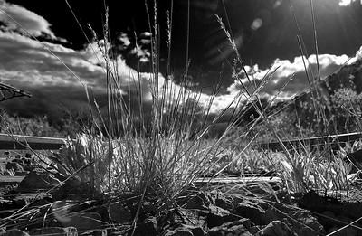 Vía abandonada en un rincón de Soria