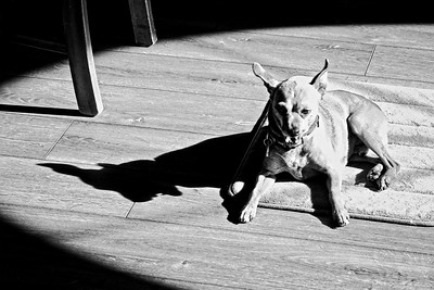 JIMMY SHADOW MONSTER