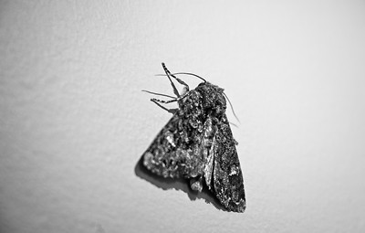 MOTH ON WALL