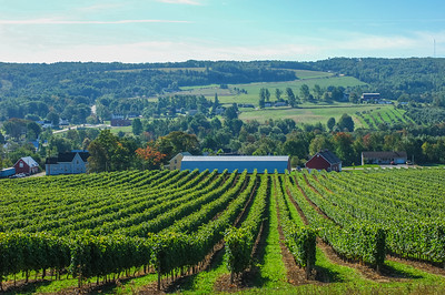 Grapes and vineyards at Gaspereau Valley Winery