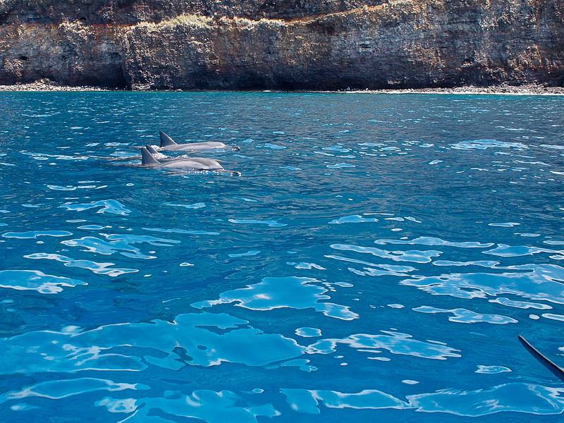Dolphins cruising Kealakekua Bay at the Big Island of Hawai'i.  (Olympus EP-1, 17 mm lens)
