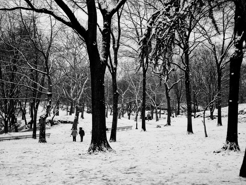 Central Park after a snowfall