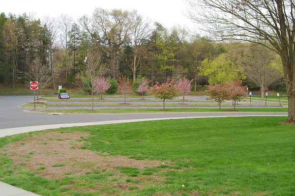Opposite angle from previous pics. Background is former student parking lot. It was not landscaped when a high school.