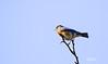 3617BIRDS-48N