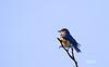 3617BIRDS-53N