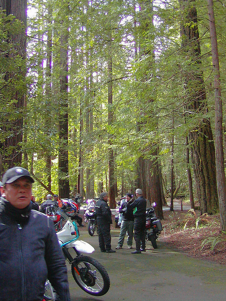 Grizzley Creek in the Redwoods