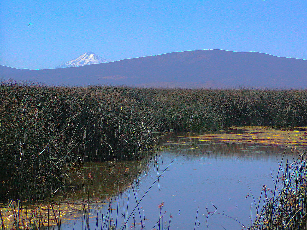 Tule Lake with Mount Shasta in the background