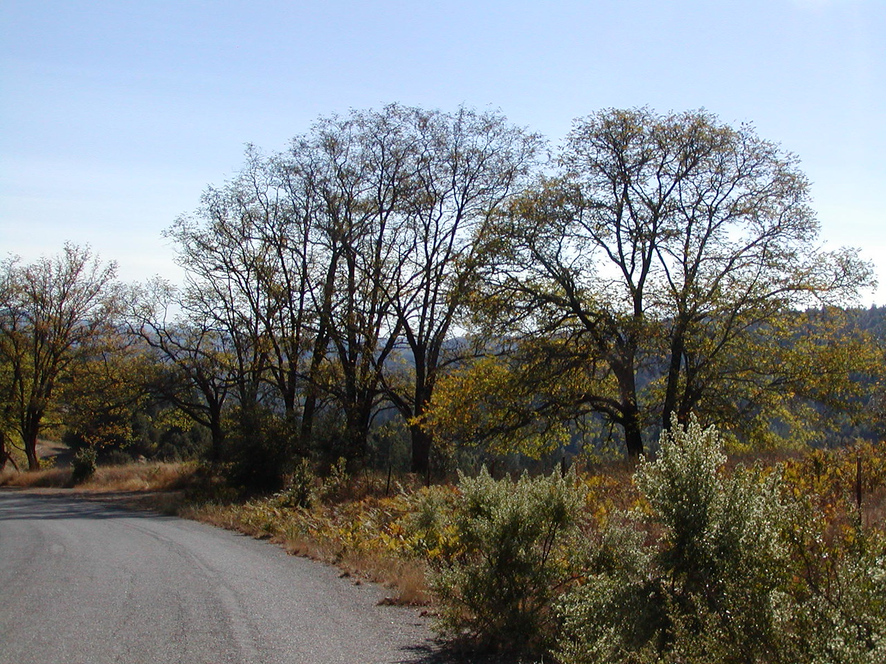 Typical view along road near Honeydew