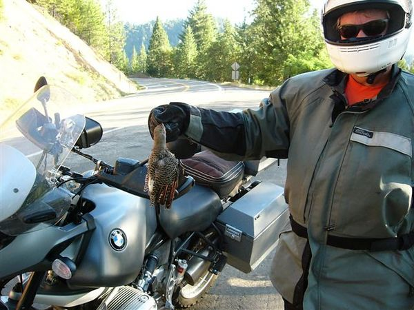 by John Kabala: Ralph Drew extracting bird from bike frame