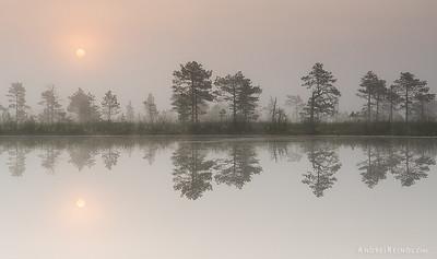 Reflection of bog
