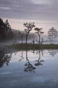 Atmospheric tree