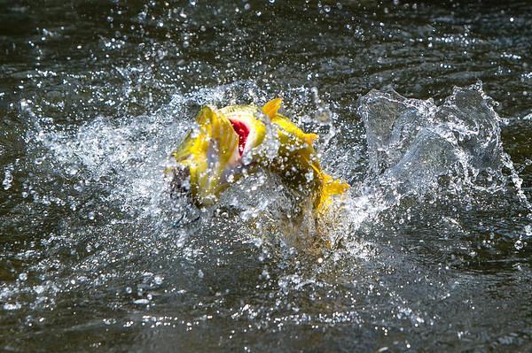 Tsimane - Bolivia - Golden Dorado - © Jim Klug Outdoor Photography