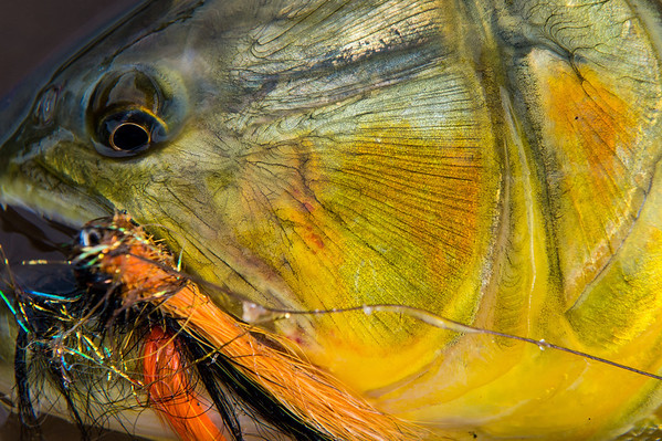 Tsimane - Bolivia - Golden Dorado - © Jim Klug Outdoor Photography