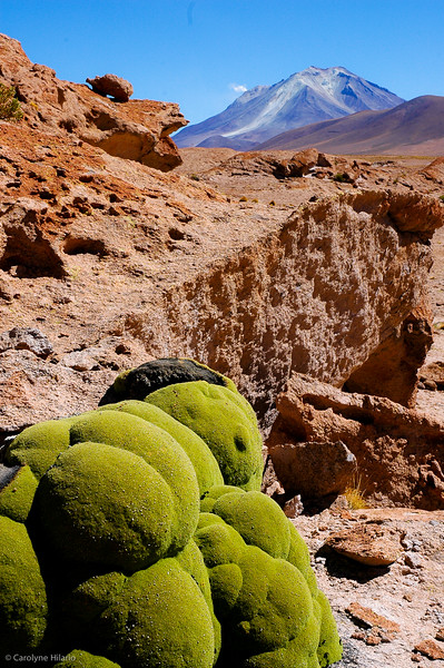 Yareta Plant<br /> <br /> These rocks on the highlands of the Andes looks like they are covered with moss. Actually, they are a type of flowing plant known as Yareta and it lives in colonies which can be thousands of years old.<br /> <br /> Salar de Uyuni (Uyuni Salt Desert)