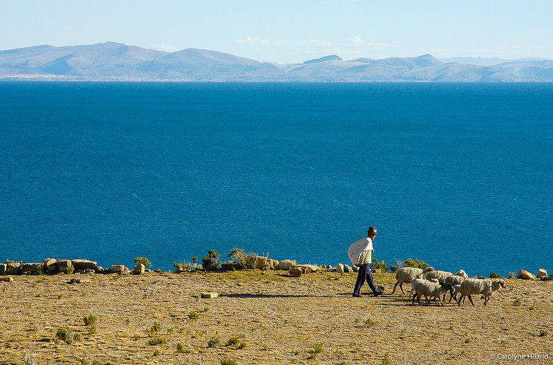 Shepherd and Flock<br /> Isla del Sol<br /> Lake Titicaca