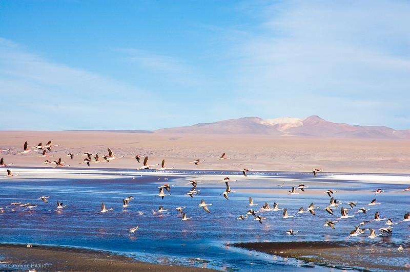 In Flight<br /> Laguna Canapa<br /> Salar de Uyuni (Uyuni Salt Desert)